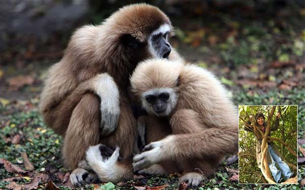 GROW UP WITH MONKEYS 1